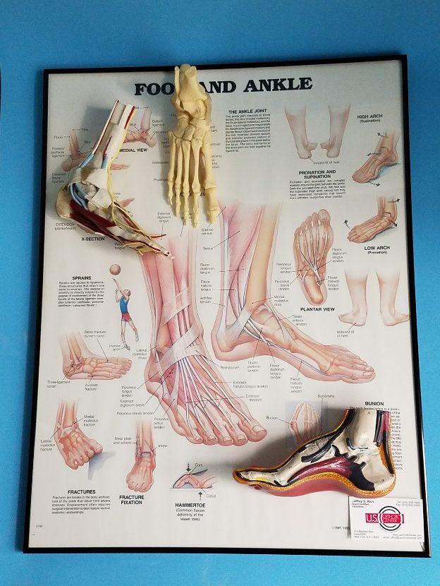Orthotic Process